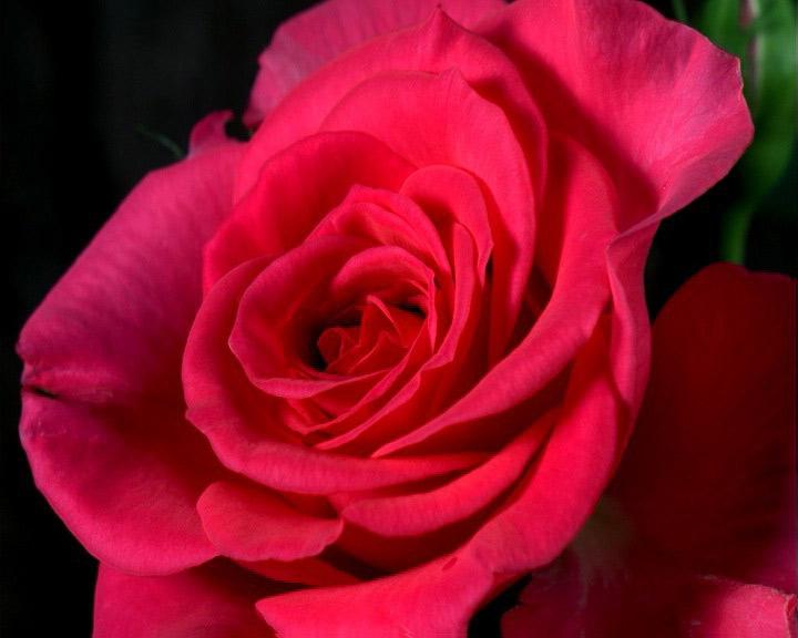 Красивые цветы фотографии и картинки
