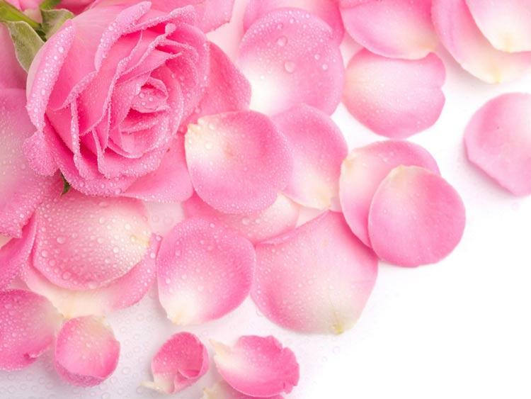 Картинки цветов красивые - 40623