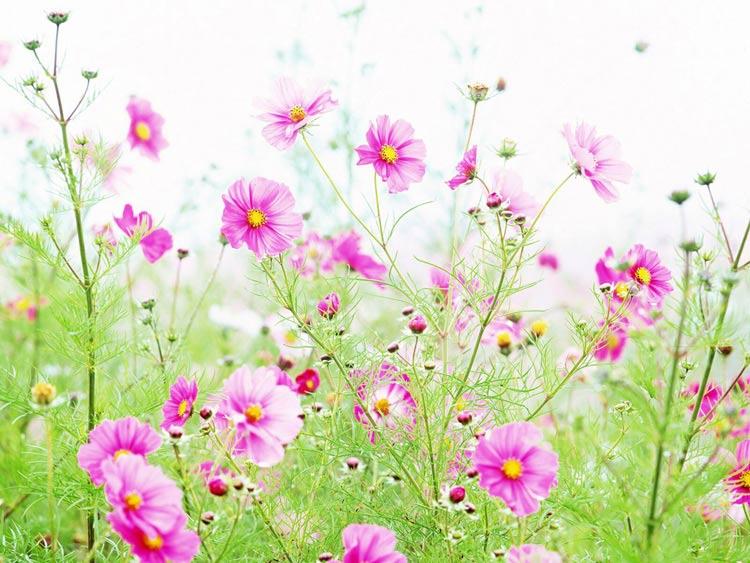 Год фото картинки и анимации цветов