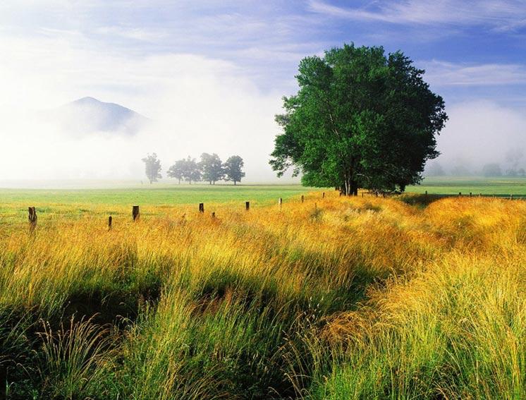 """Дерево в поле, природа, пейзаж, дерево, поле.  Оригинал схемы вышивки  """"Дерево в поле """" ."""