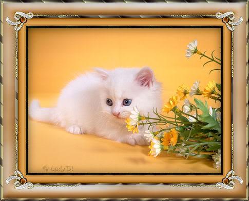 Беленький котёнок